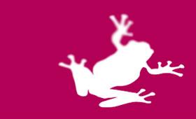 Magenta Frog